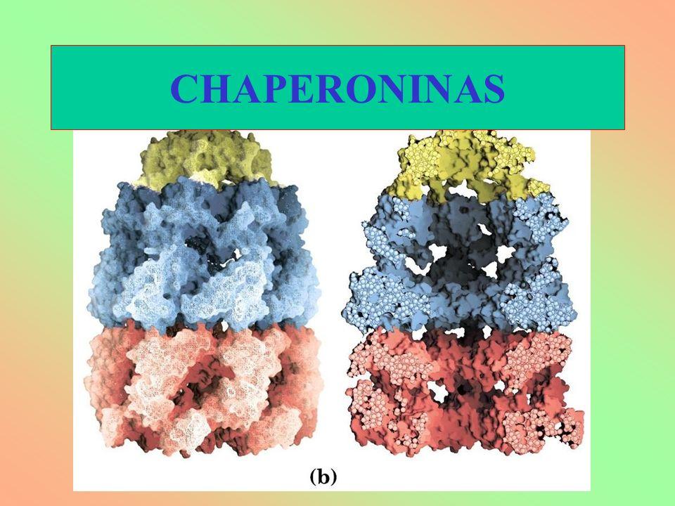 CHAPERONINAS