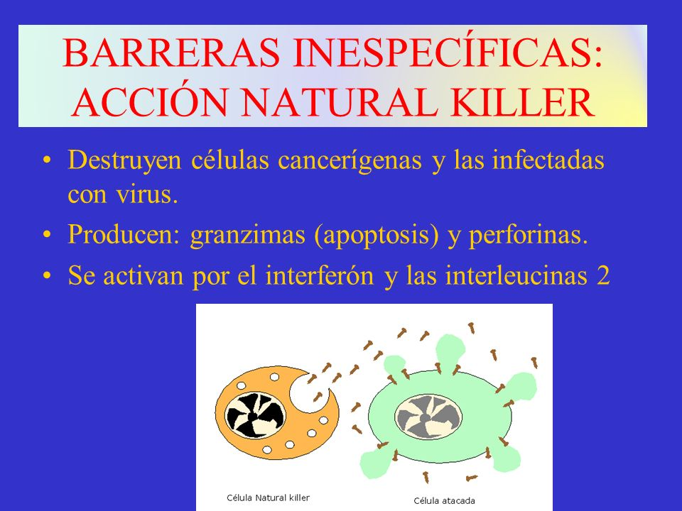 BARRERAS INESPECÍFICAS: ACCIÓN NATURAL KILLER