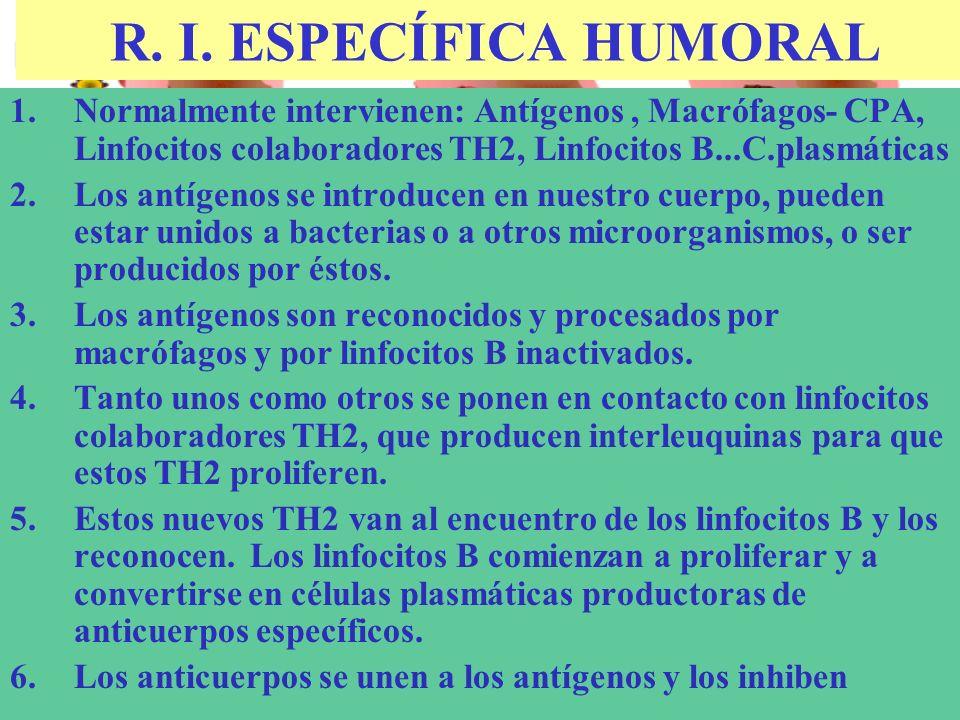R. I. ESPECÍFICA HUMORAL Normalmente intervienen: Antígenos , Macrófagos- CPA, Linfocitos colaboradores TH2, Linfocitos B...C.plasmáticas.