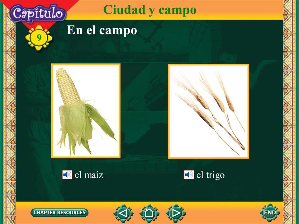 Ciudad y campo En el campo el maíz el trigo