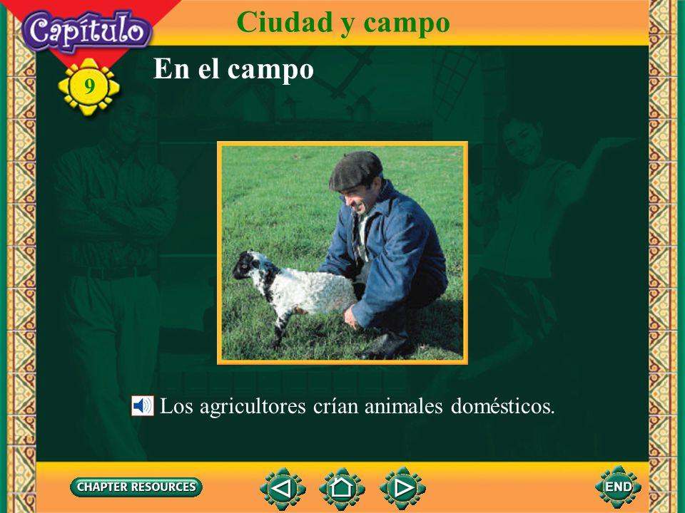 Ciudad y campo En el campo Los agricultores crían animales domésticos.