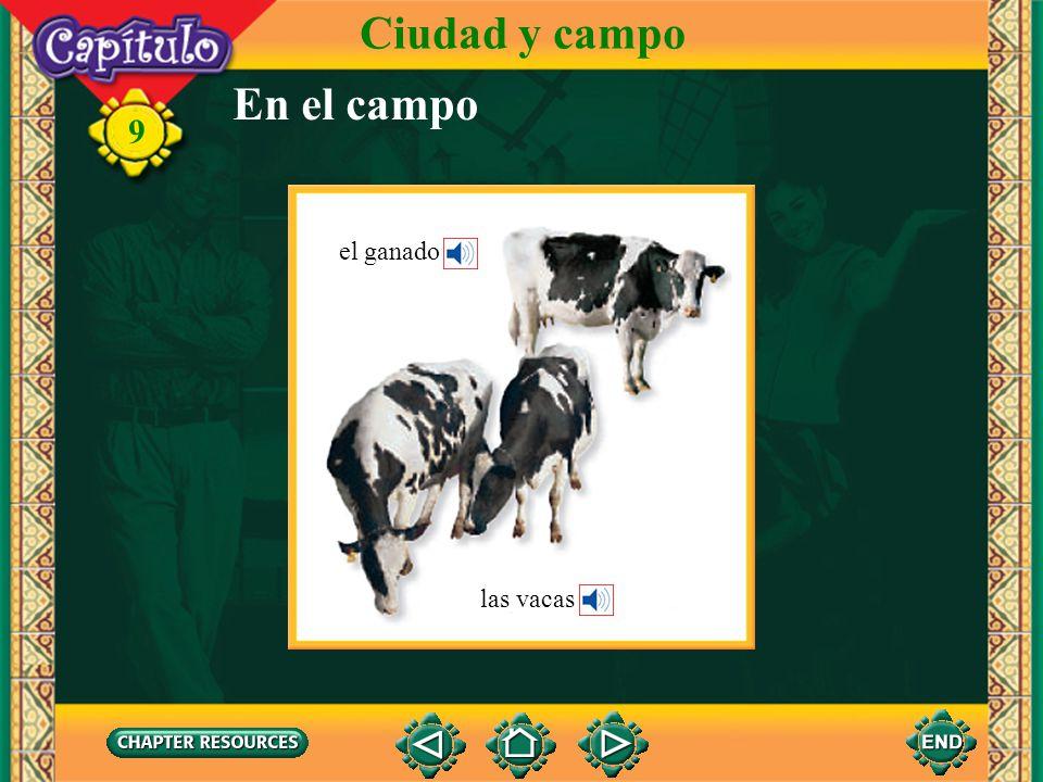 Ciudad y campo En el campo el ganado las vacas