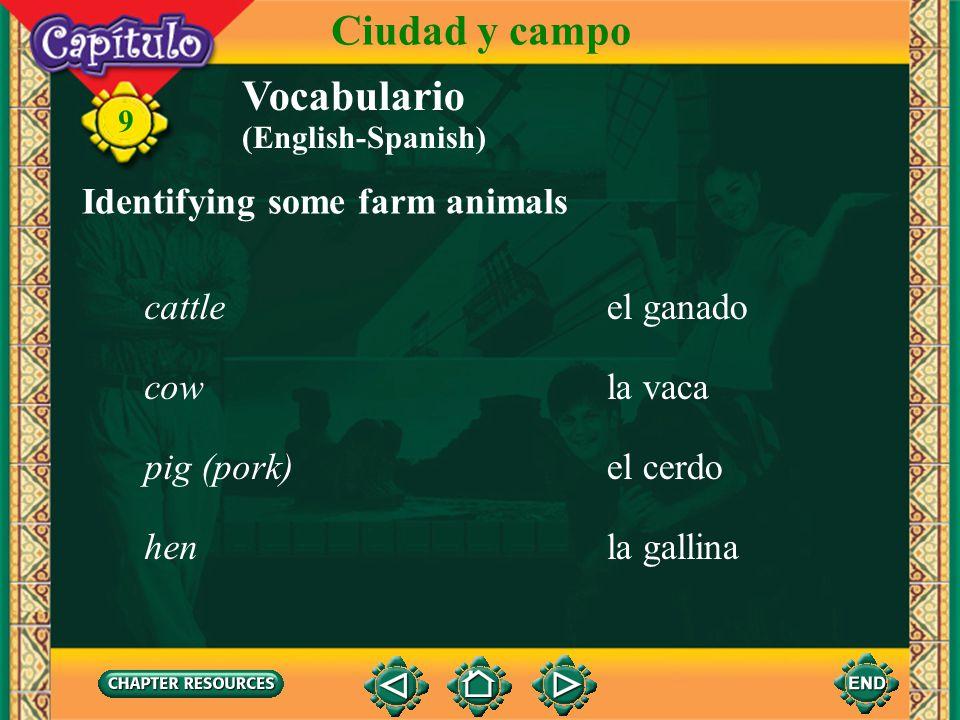 Ciudad y campo Vocabulario Identifying some farm animals cattle