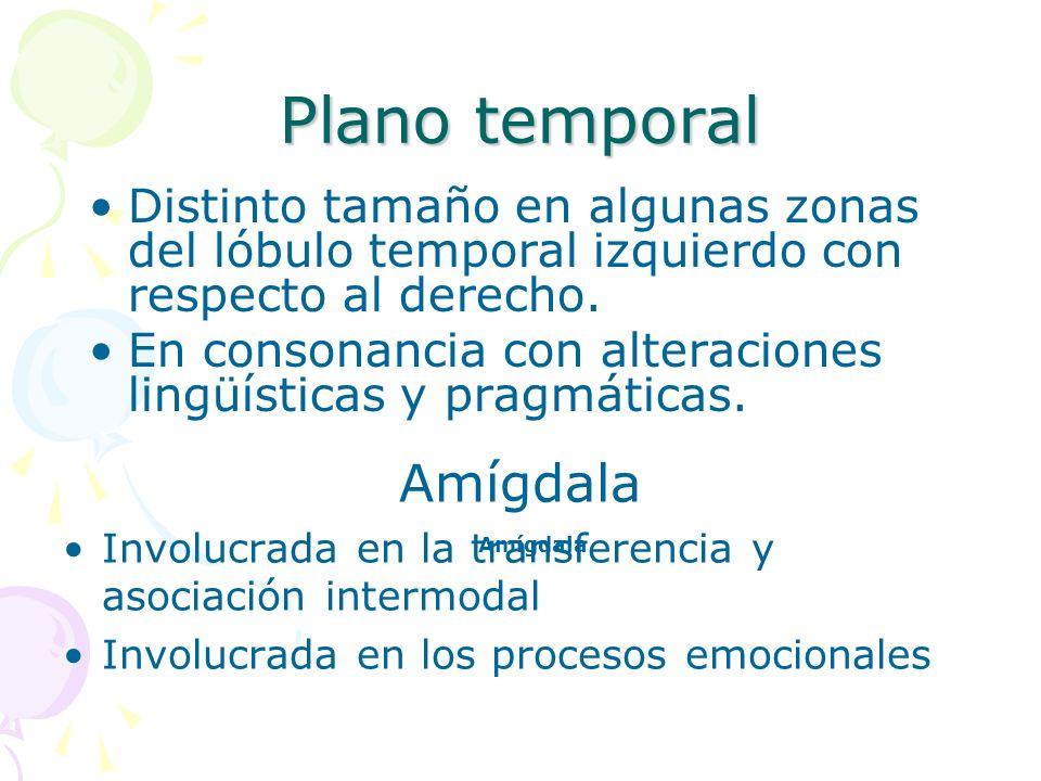 Plano temporal Amígdala