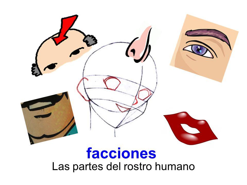 Las partes del rostro humano