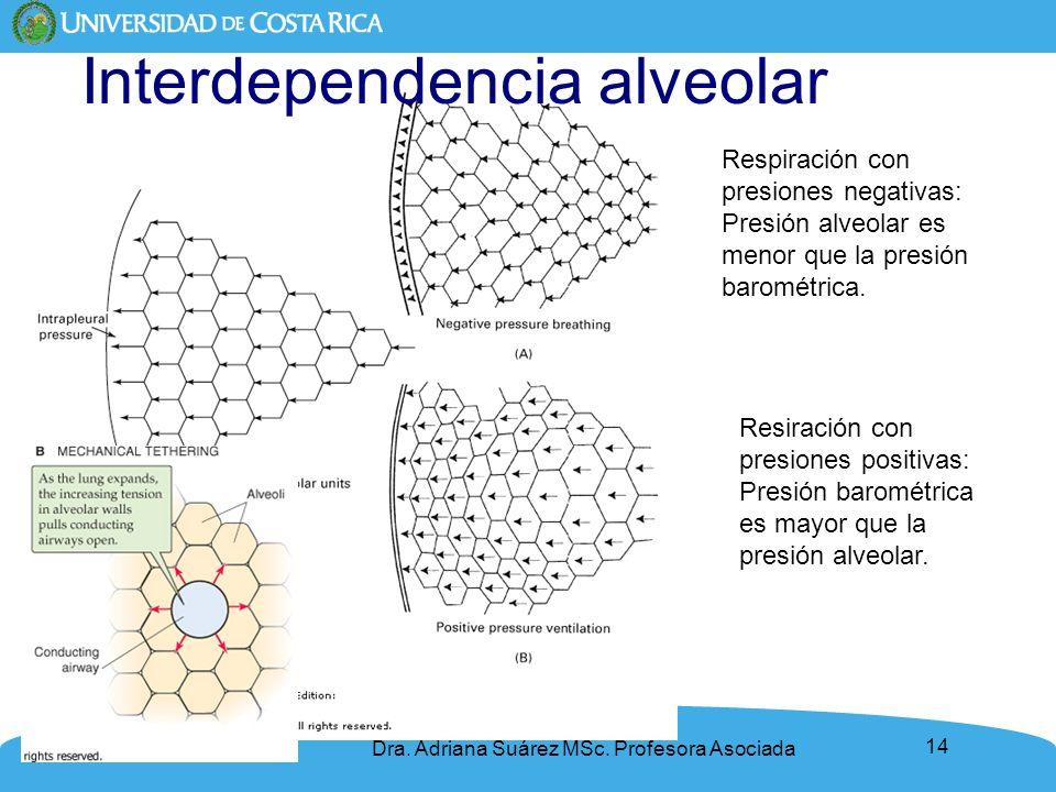 Interdependencia alveolar