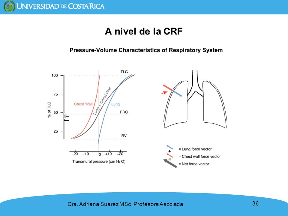 A nivel de la CRF Dra. Adriana Suárez MSc. Profesora Asociada