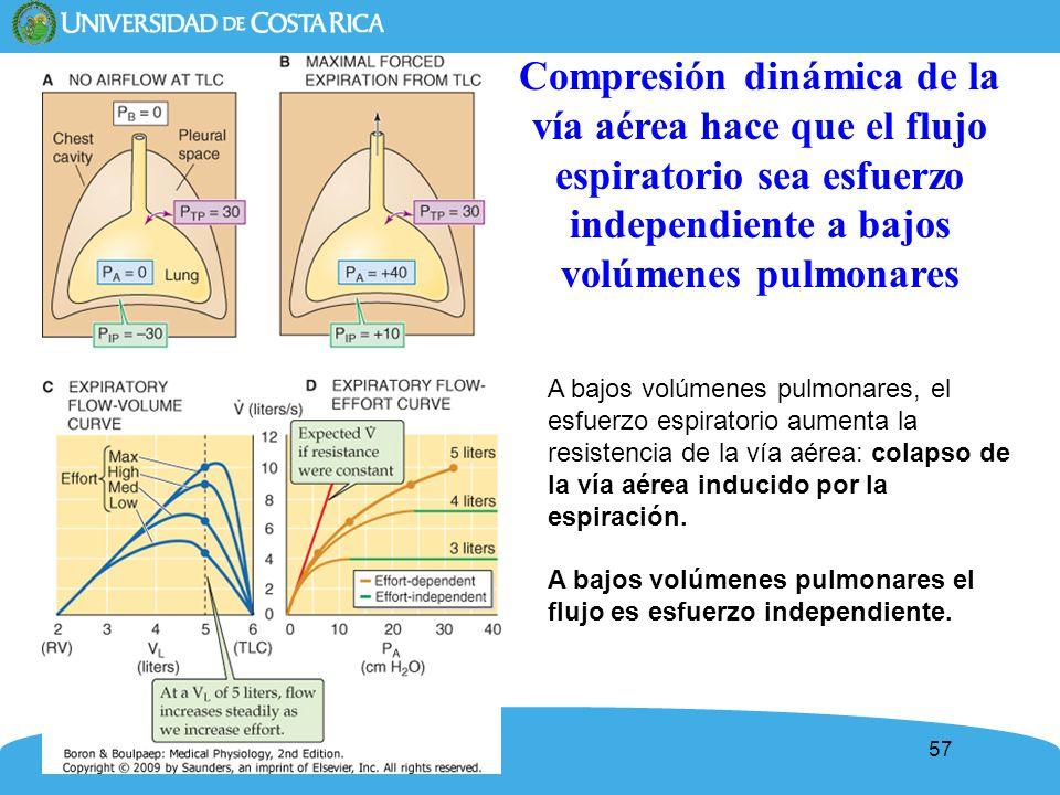 Compresión dinámica de la vía aérea hace que el flujo espiratorio sea esfuerzo independiente a bajos volúmenes pulmonares