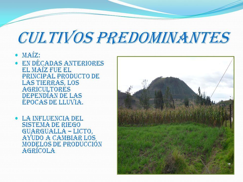 CULTIVOS PREDOMINANTES