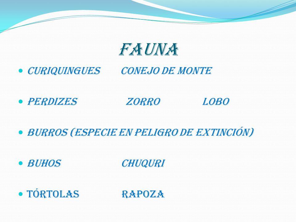 FAUNA CURIQUINGUES CONEJO DE MONTE PERDIZES ZORRO LOBO