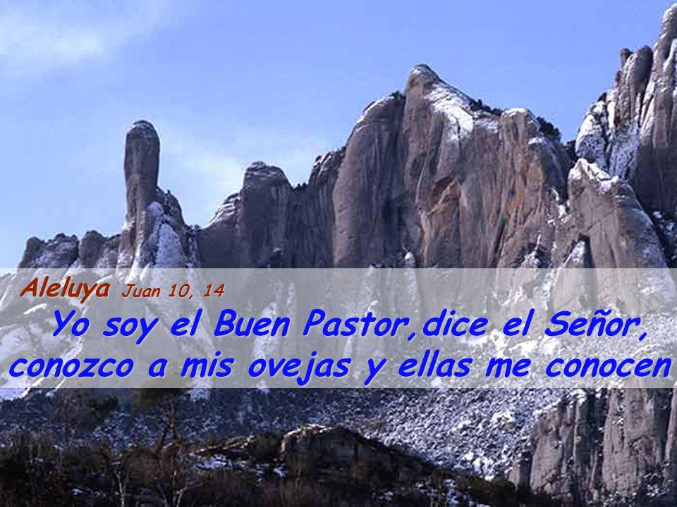 Aleluya Juan 10, 14 Yo soy el Buen Pastor,dice el Señor, conozco a mis ovejas y ellas me conocen