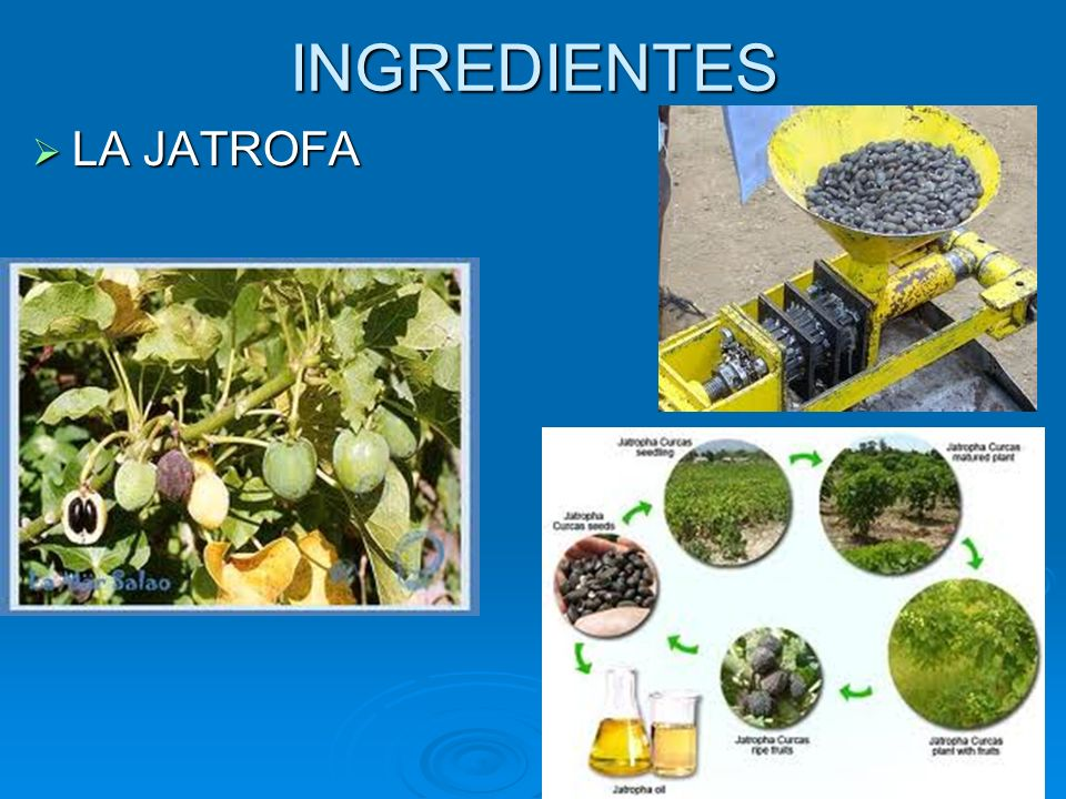 INGREDIENTES LA JATROFA