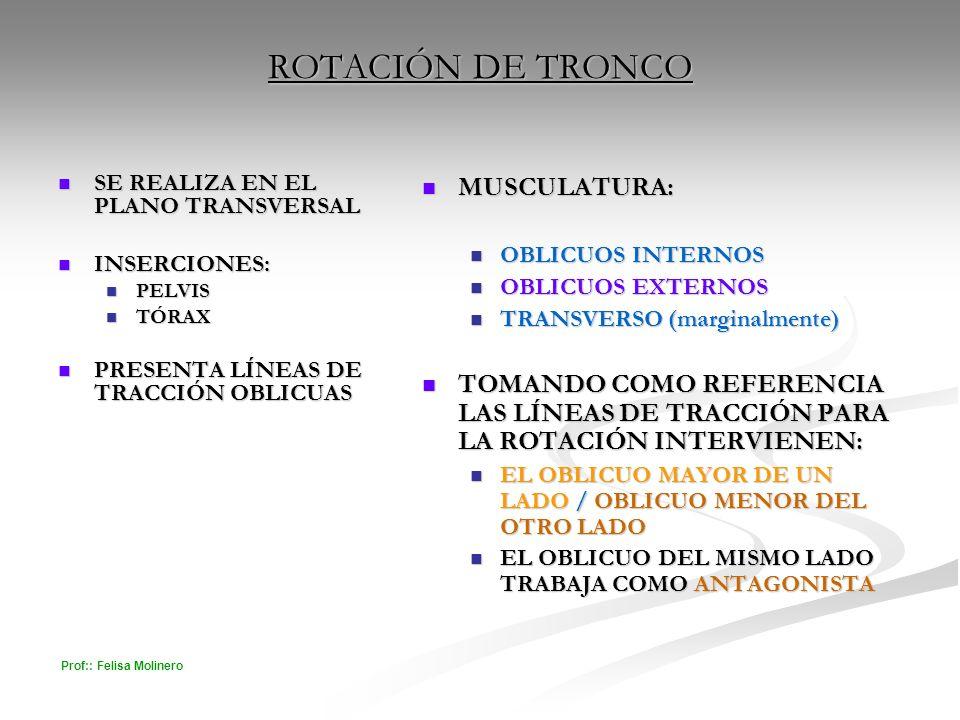 ROTACIÓN DE TRONCO MUSCULATURA: