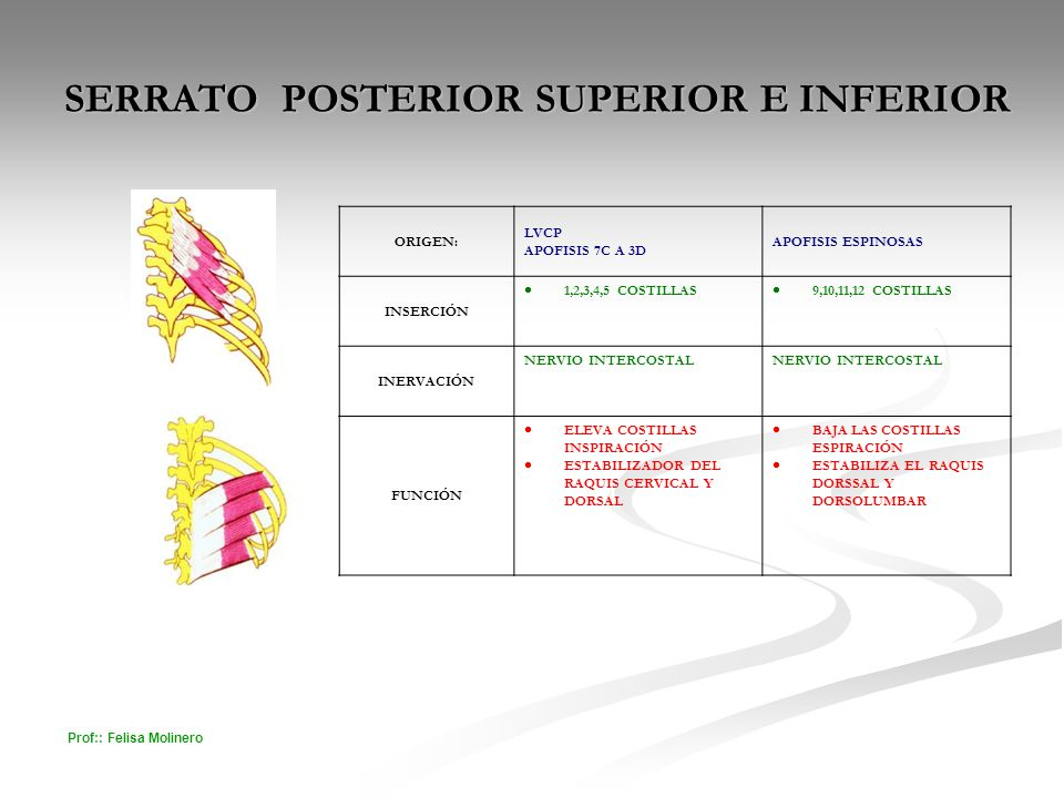 SERRATO POSTERIOR SUPERIOR E INFERIOR