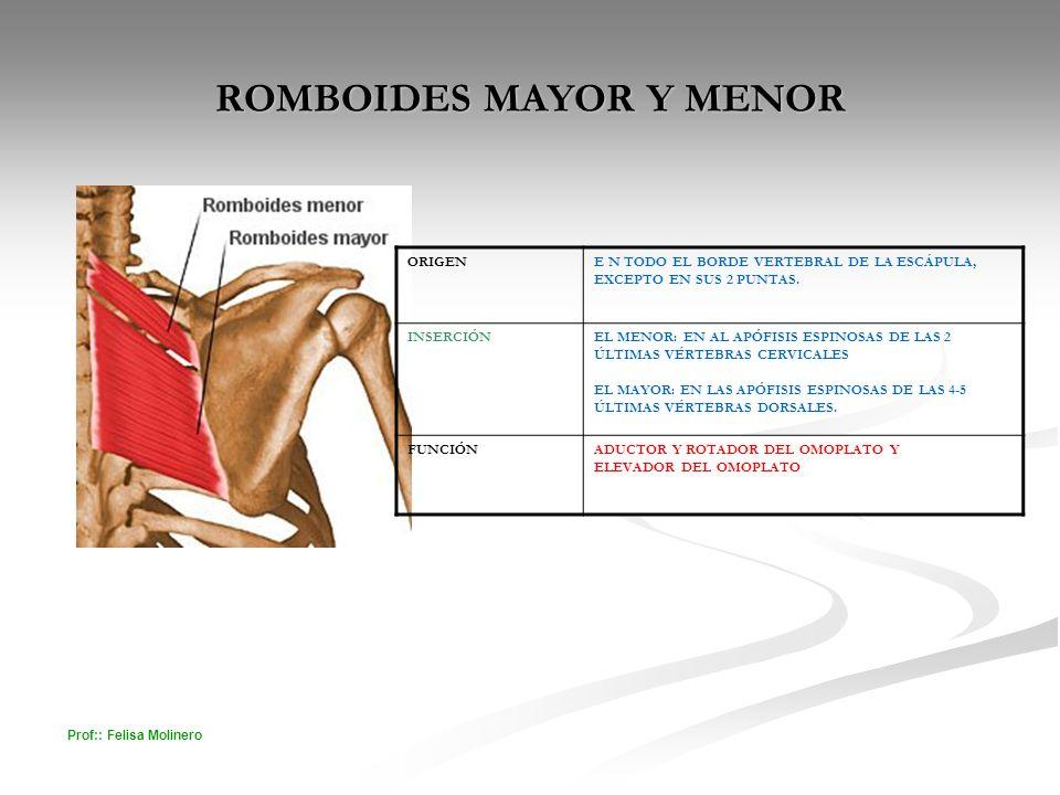 ROMBOIDES MAYOR Y MENOR