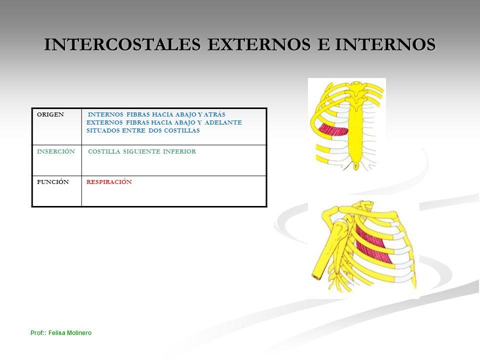 INTERCOSTALES EXTERNOS E INTERNOS