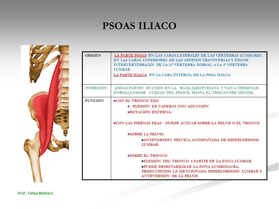 PSOAS ILIACO ORIGEN.