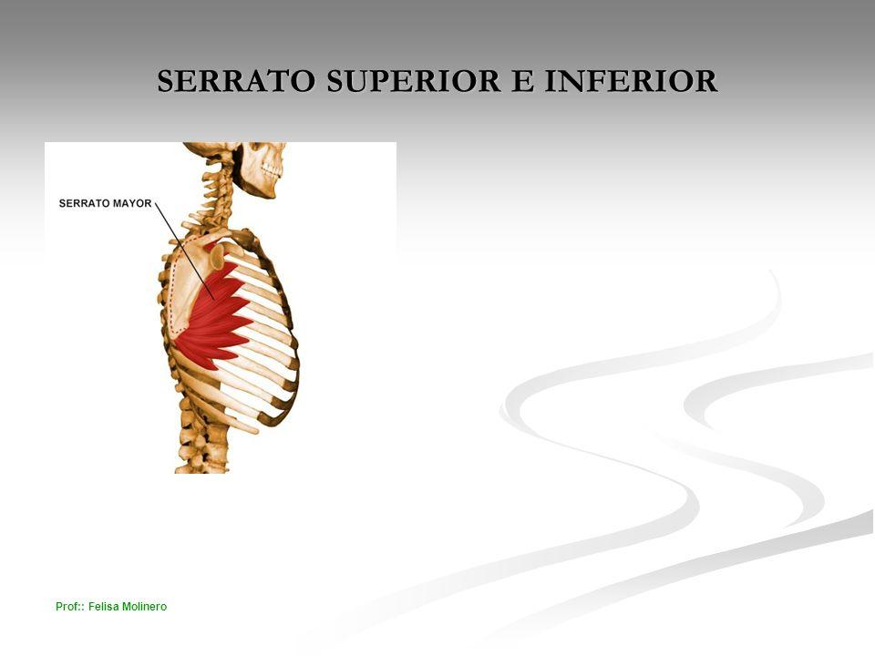 SERRATO SUPERIOR E INFERIOR