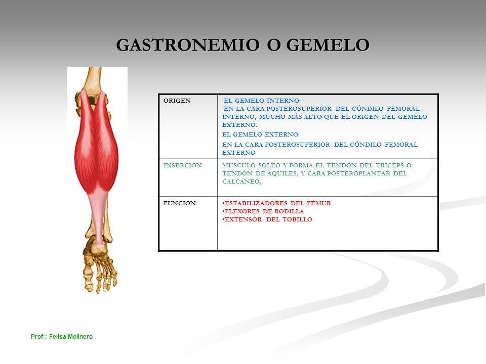GASTRONEMIO O GEMELO ORIGEN EL GEMELO INTERNO: