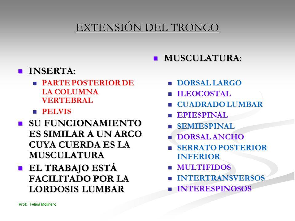 EXTENSIÓN DEL TRONCO MUSCULATURA: INSERTA: