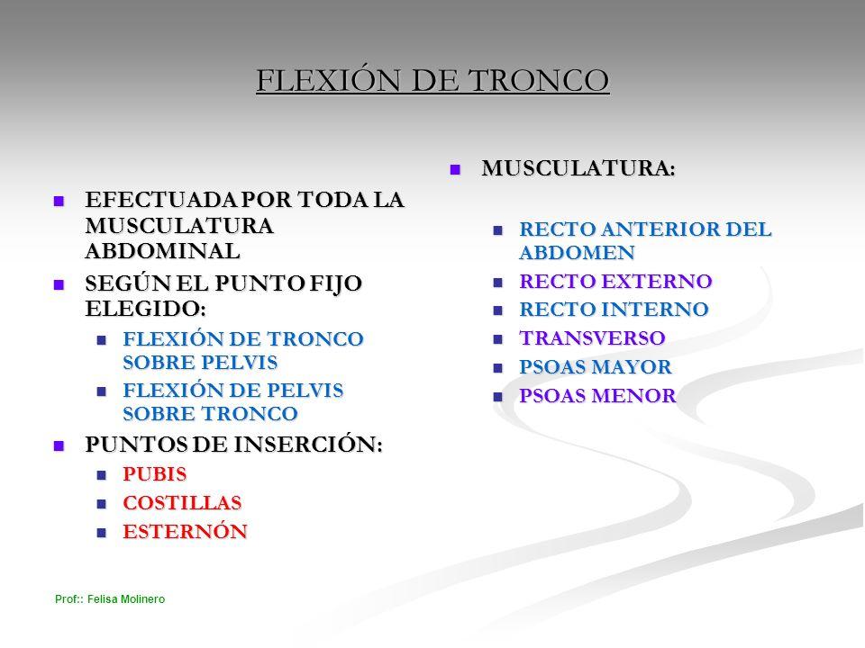 FLEXIÓN DE TRONCO MUSCULATURA: