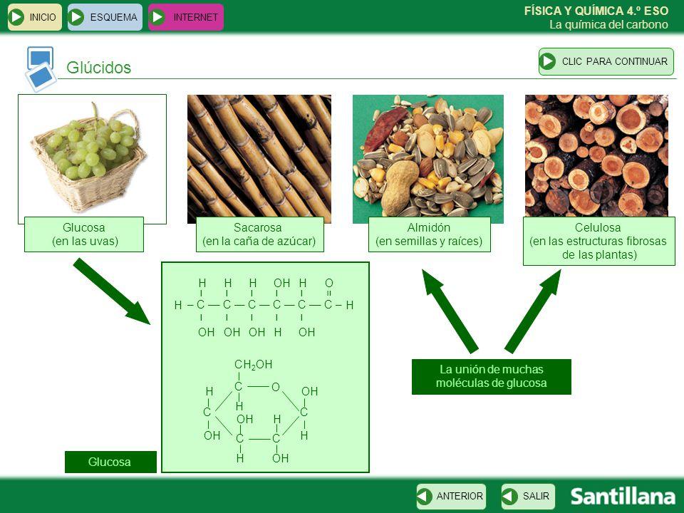 Glúcidos Glucosa (en las uvas) Sacarosa (en la caña de azúcar)