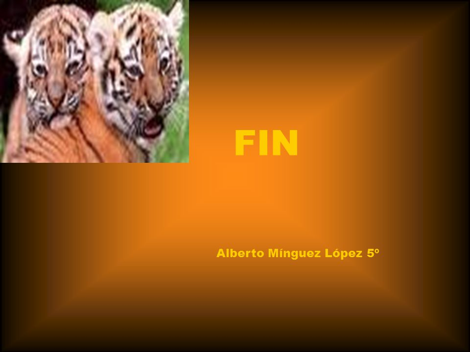 FIN Alberto Mínguez López 5º