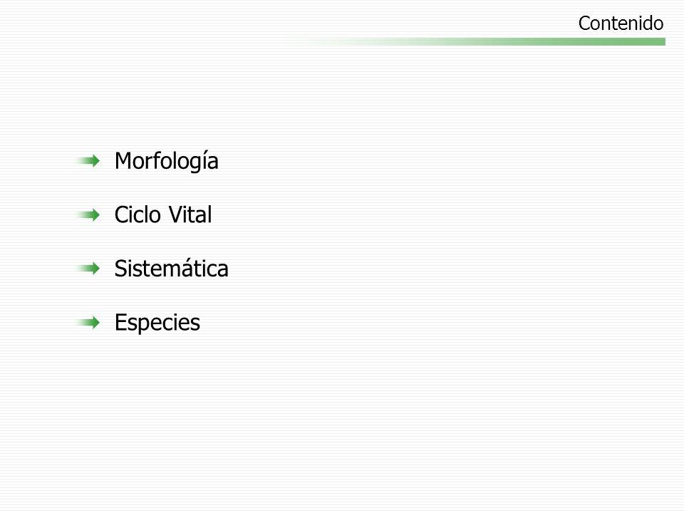 Contenido Morfología Ciclo Vital Sistemática Especies
