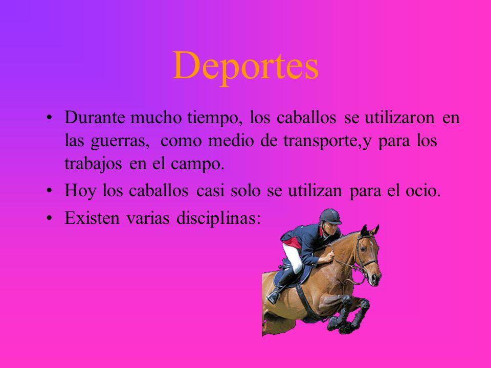 Deportes Durante mucho tiempo, los caballos se utilizaron en las guerras, como medio de transporte,y para los trabajos en el campo.