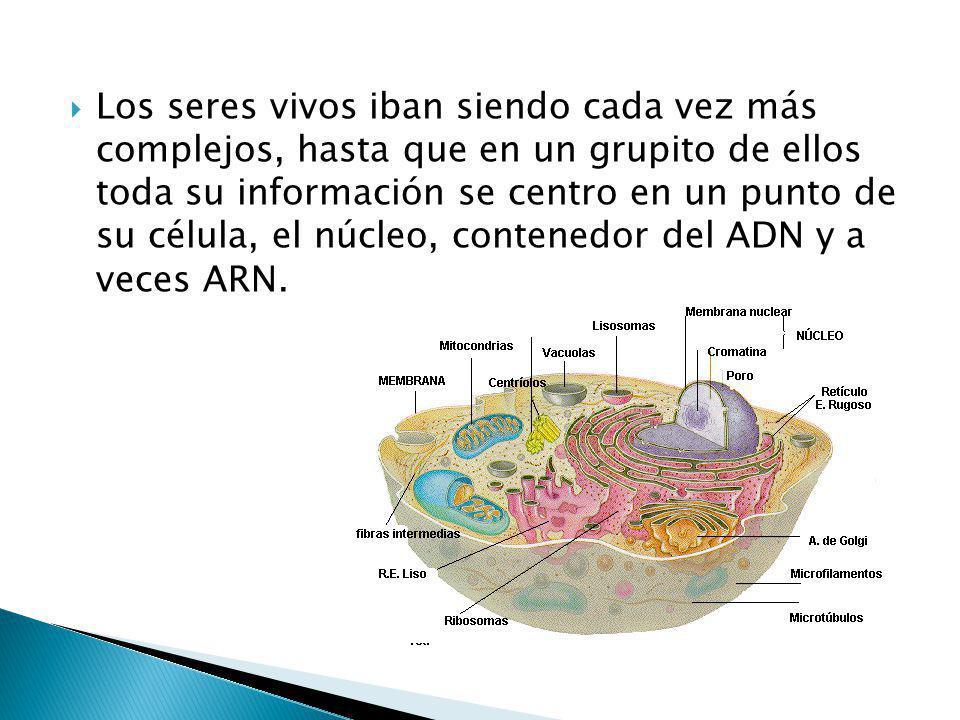 Los seres vivos iban siendo cada vez más complejos, hasta que en un grupito de ellos toda su información se centro en un punto de su célula, el núcleo, contenedor del ADN y a veces ARN.