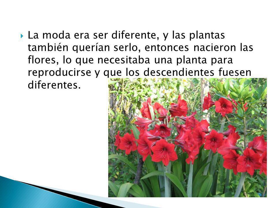 La moda era ser diferente, y las plantas también querían serlo, entonces nacieron las flores, lo que necesitaba una planta para reproducirse y que los descendientes fuesen diferentes.