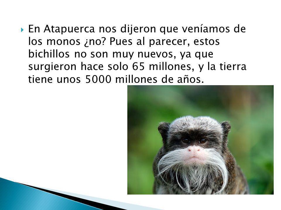 En Atapuerca nos dijeron que veníamos de los monos ¿no
