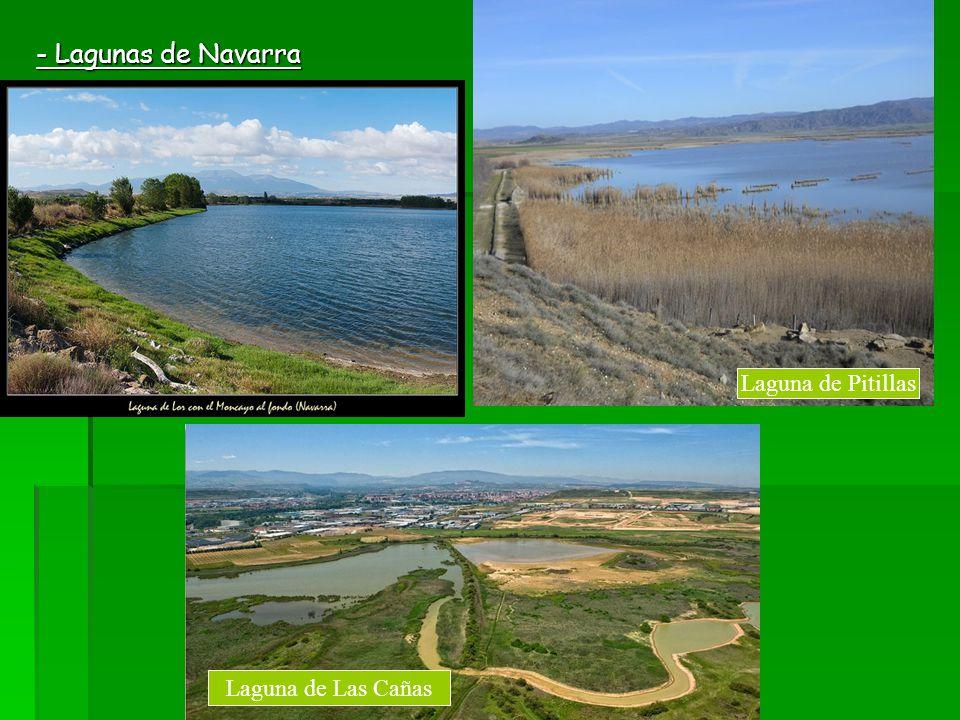 - Lagunas de Navarra Laguna de Pitillas Laguna de Pitillas