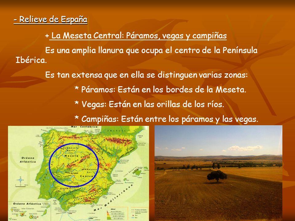 - Relieve de España + La Meseta Central: Páramos, vegas y campiñas. Es una amplia llanura que ocupa el centro de la Península Ibérica.