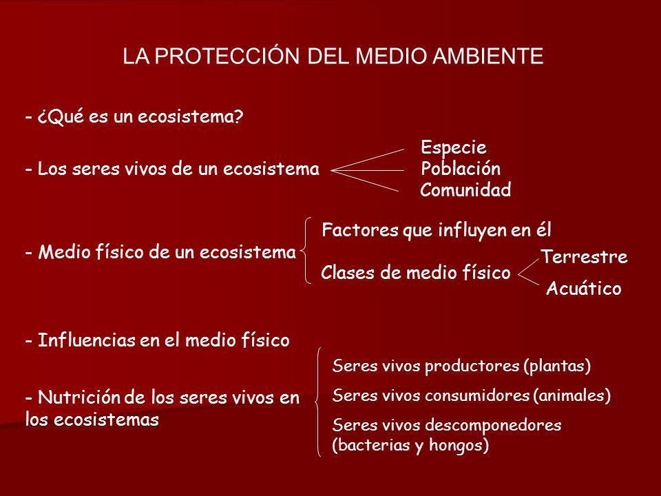 LA PROTECCIÓN DEL MEDIO AMBIENTE