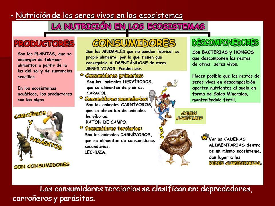 - Nutrición de los seres vivos en los ecosistemas