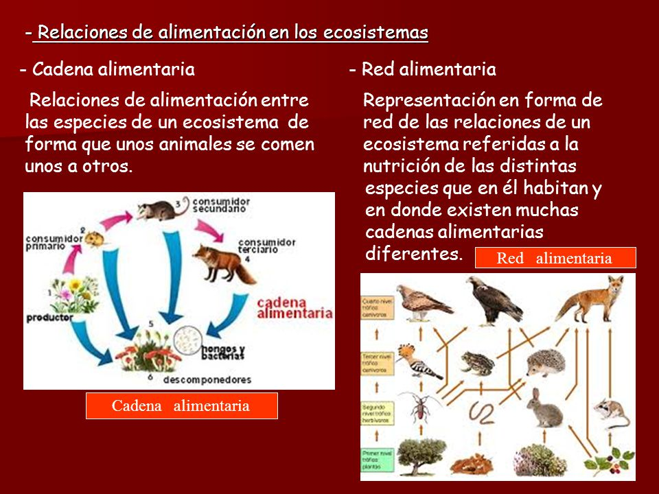Relaciones de alimentación en los ecosistemas