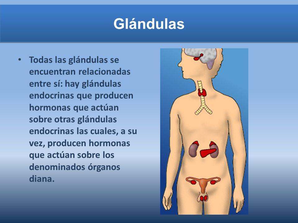 Glándulas