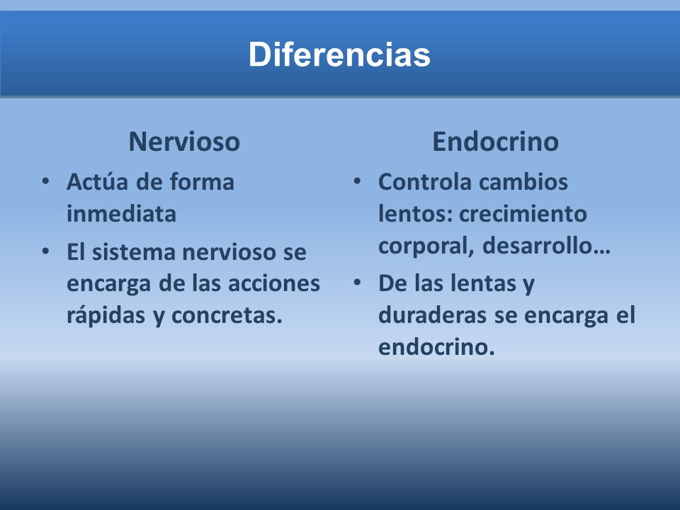 Diferencias Nervioso Endocrino Actúa de forma inmediata