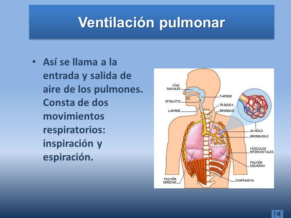 Ventilación pulmonar Así se llama a la entrada y salida de aire de los pulmones.