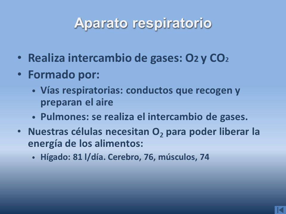 Aparato respiratorio Realiza intercambio de gases: O2 y CO2