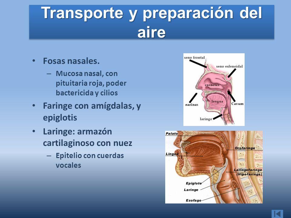 Transporte y preparación del aire