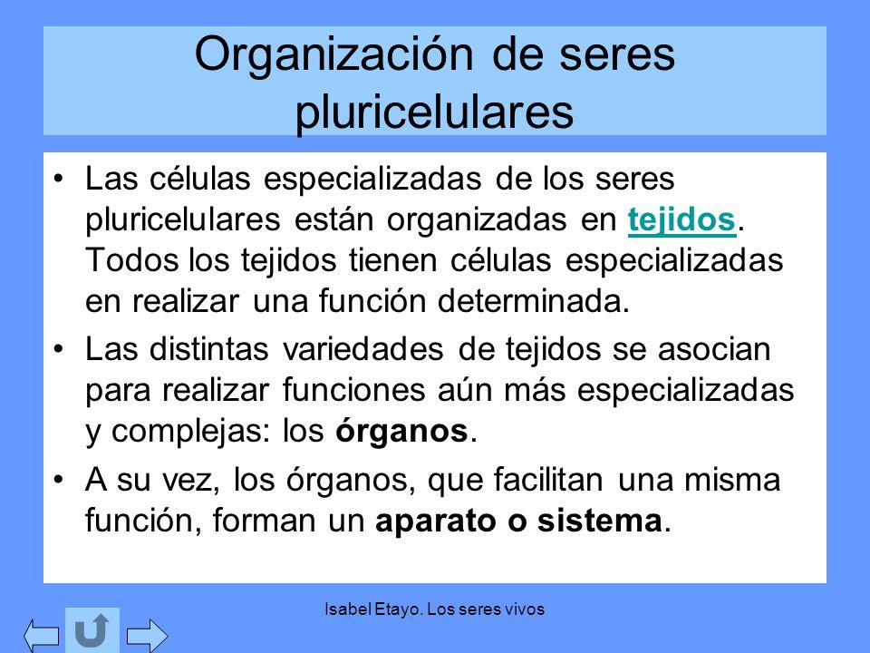 Organización de seres pluricelulares
