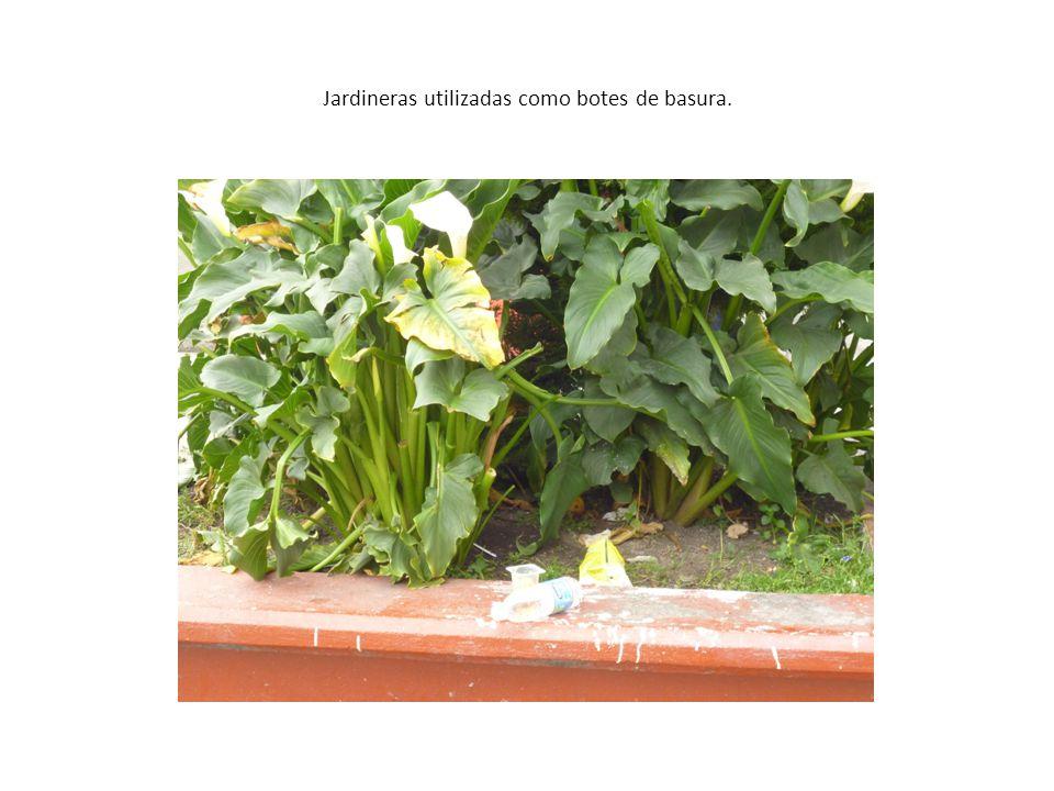 Jardineras utilizadas como botes de basura.