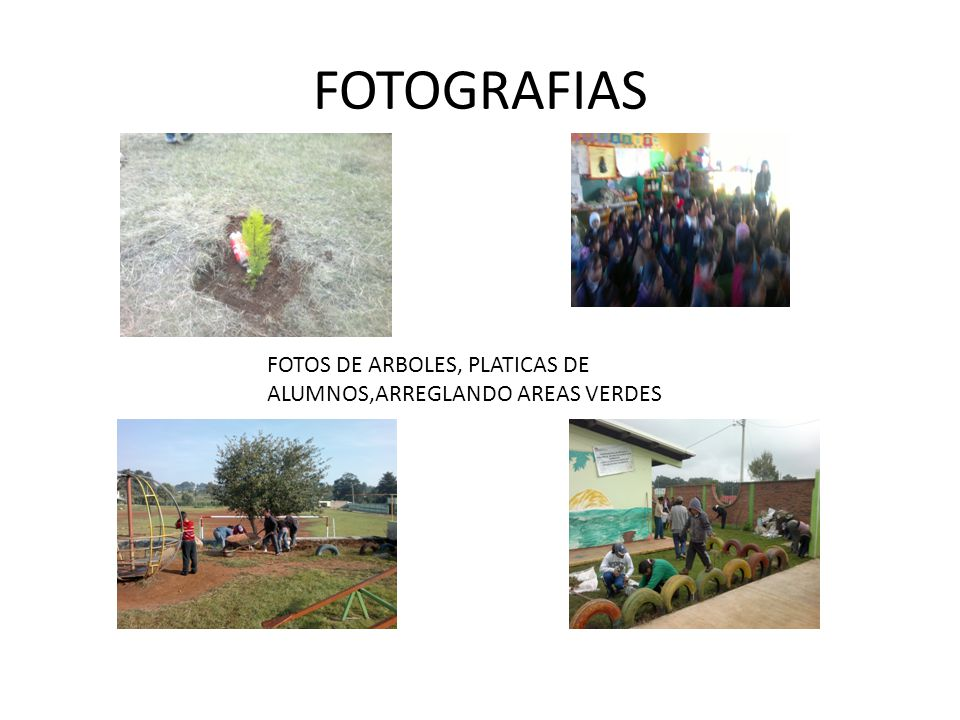 FOTOGRAFIAS FOTOS DE ARBOLES, PLATICAS DE ALUMNOS,ARREGLANDO AREAS VERDES