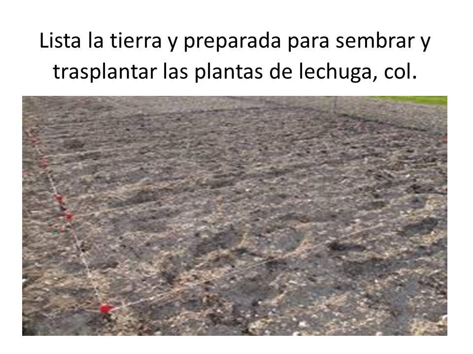 Lista la tierra y preparada para sembrar y trasplantar las plantas de lechuga, col.