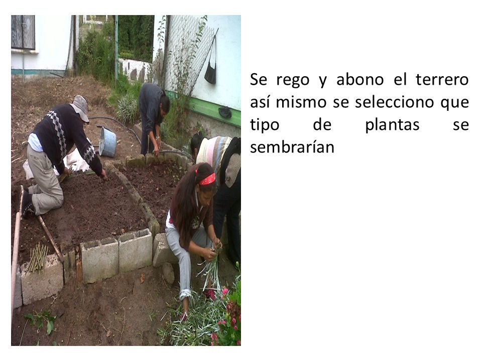 Se rego y abono el terrero así mismo se selecciono que tipo de plantas se sembrarían