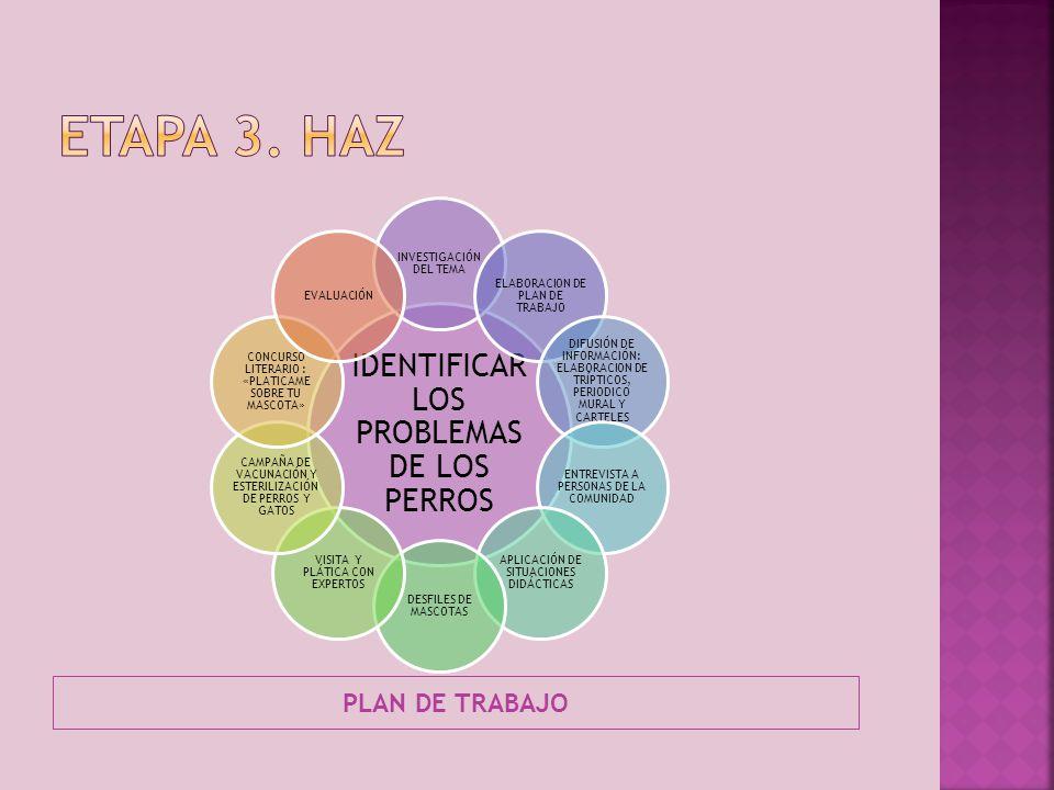 Etapa 3. haz IDENTIFICAR LOS PROBLEMAS DE LOS PERROS PLAN DE TRABAJO