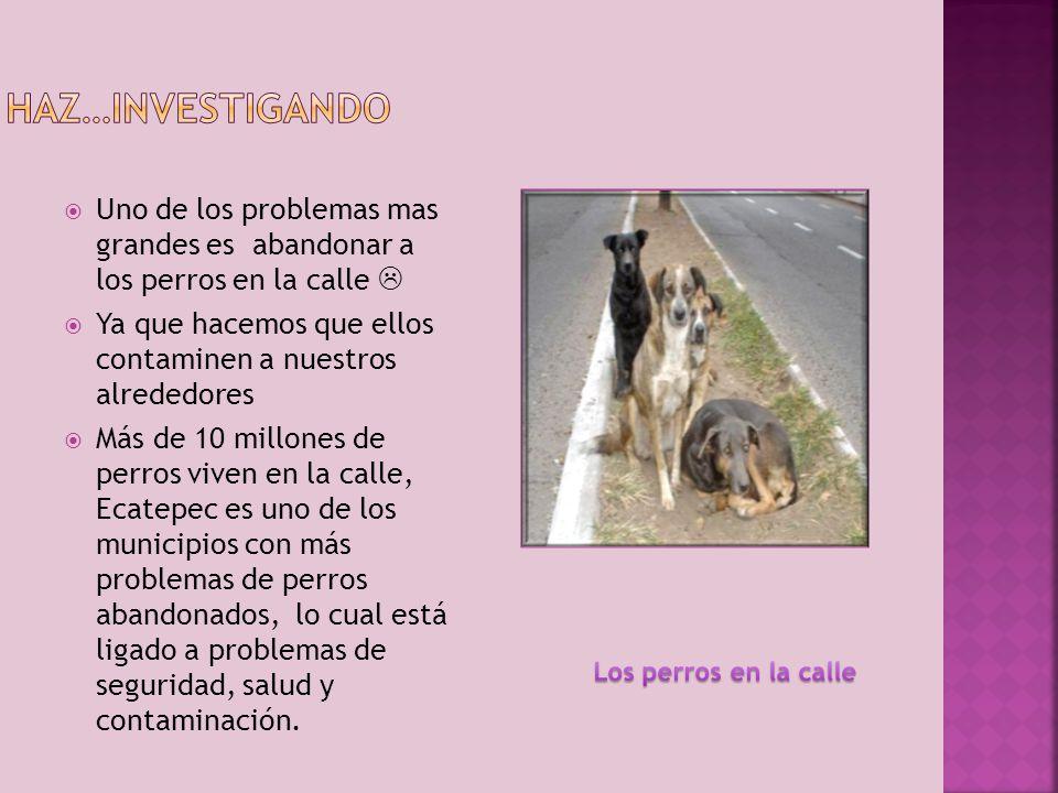 Haz…investigando Uno de los problemas mas grandes es abandonar a los perros en la calle 