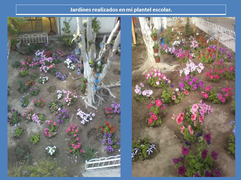Jardines realizados en mi plantel escolar.